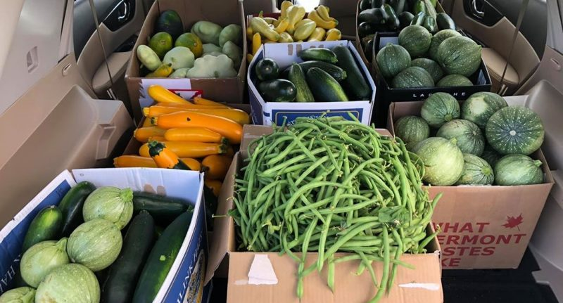 Recent gleanings from area gardens.